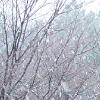 snow041229_2_sumbs.jpg