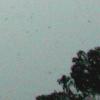 snow041229_sumbs.jpg